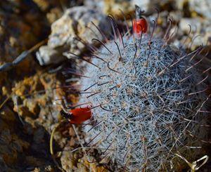 Cactus No.3