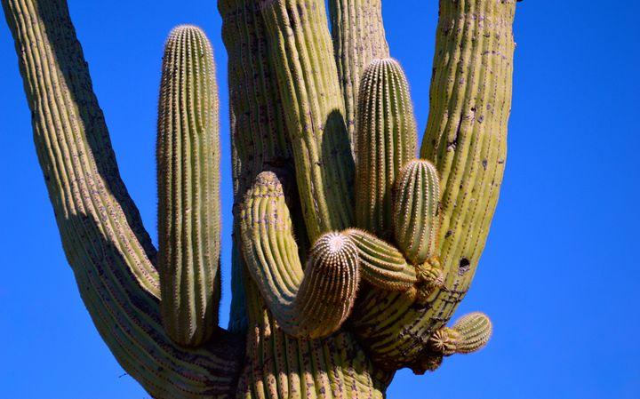Cactus no.4 - Gus's Art