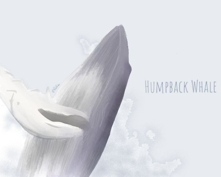 Humpback whale - CHROMA ET PICTA