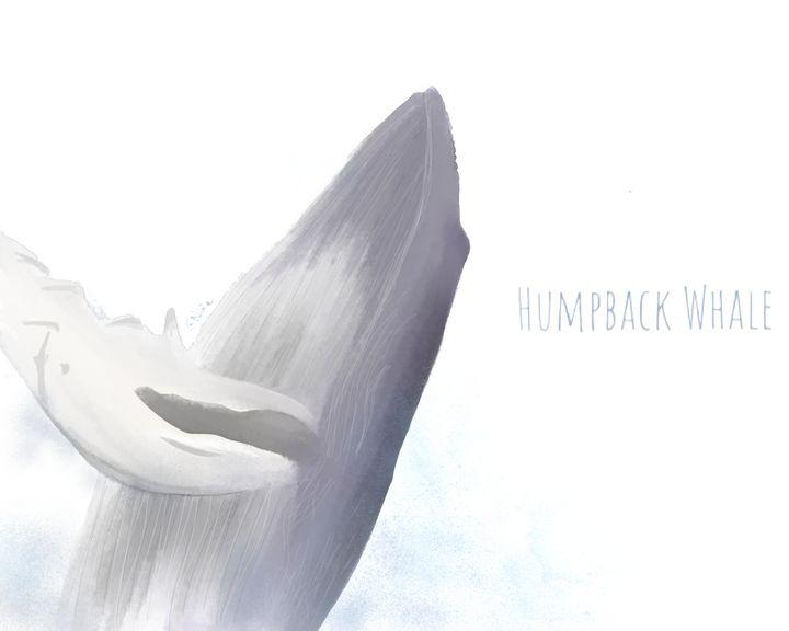Humpback whale (plain) - CHROMA ET PICTA