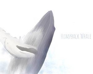 Humpback whale (plain)