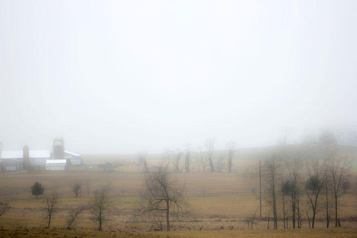 Fog - DD