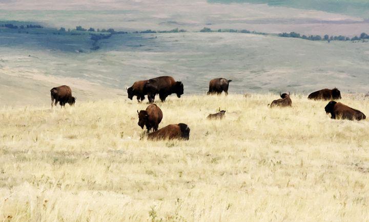 , National Bison Range - Larry Stolle