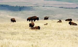 , National Bison Range
