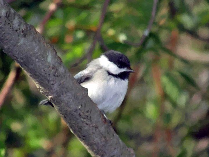 Bird - Larry Stolle