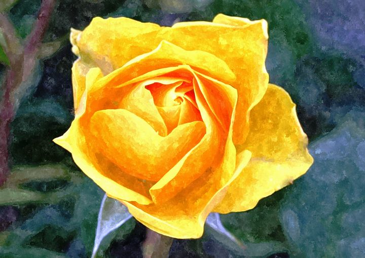 Yellow Rose - Larry Stolle