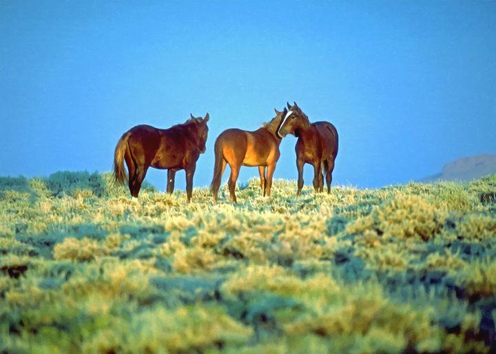 Wild Horses - Larry Stolle