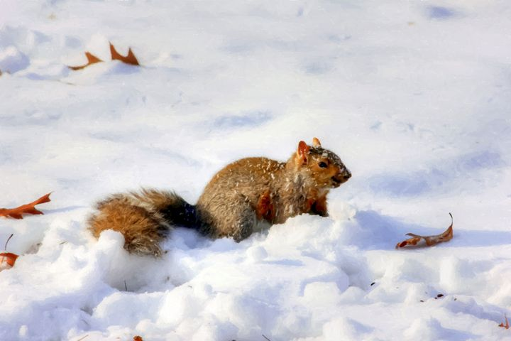 MONTANA Squirrel - Larry Stolle
