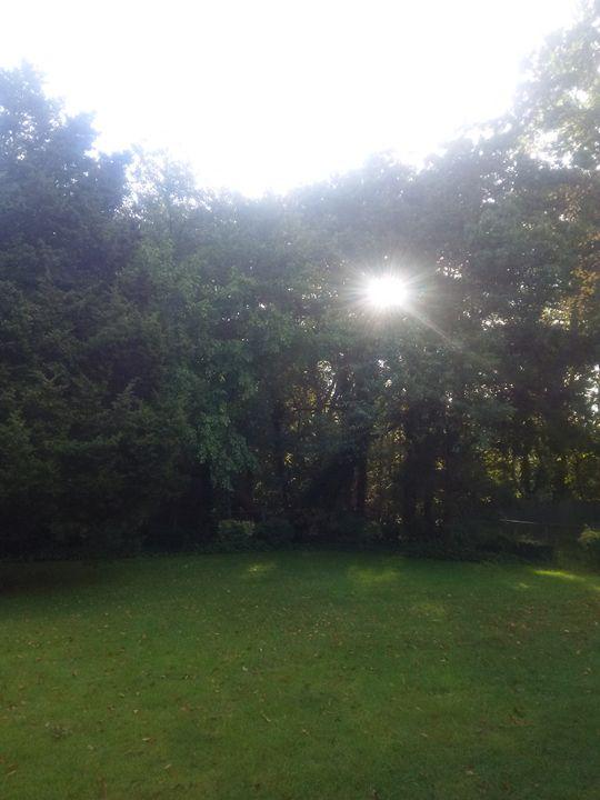 Backyard in Brentwood - Paul
