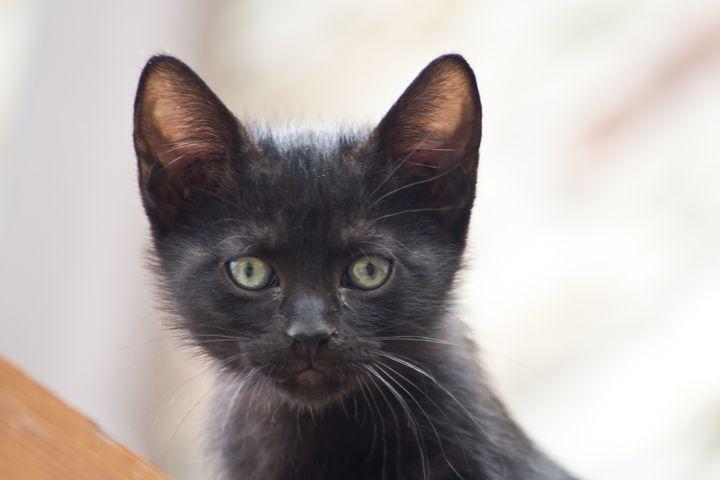 black kitten close-up. Animal pictur - brunopaolobenedetti
