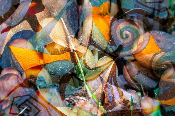 soft tones and transparencies - BBS Art