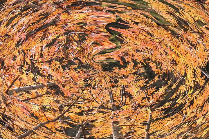 fall vortex - brunopaolobenedetti