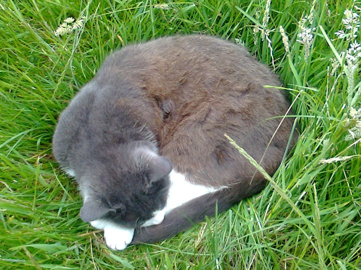 cat in the grass - Julie Chiveseed