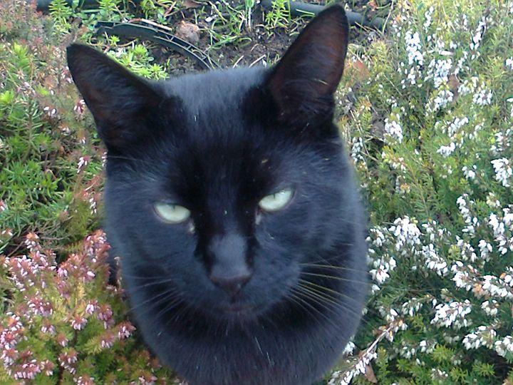 cat alert - Julie Chiveseed