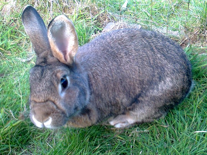 inquisitive rabbit - Julie Chiveseed