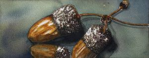 Three Acorns by Grace Fong