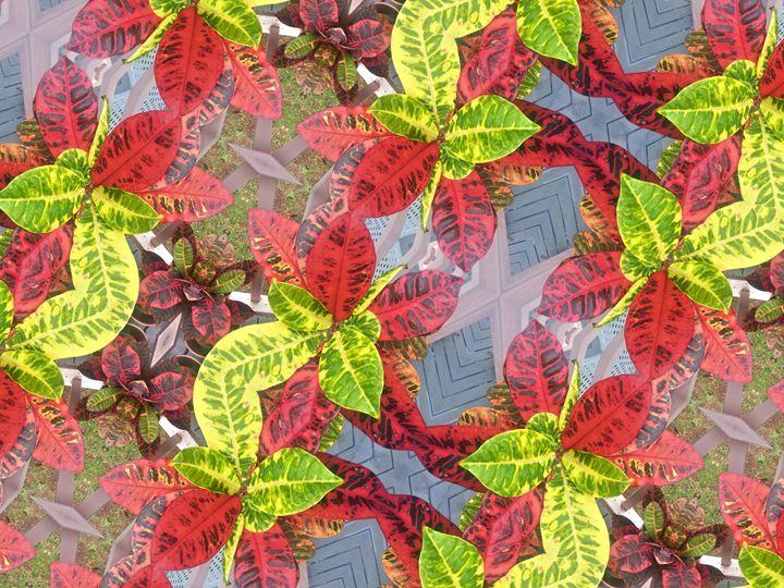 Aloha Print - Croton - Boogiba
