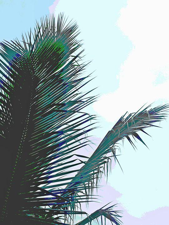 Coconut - Boogiba