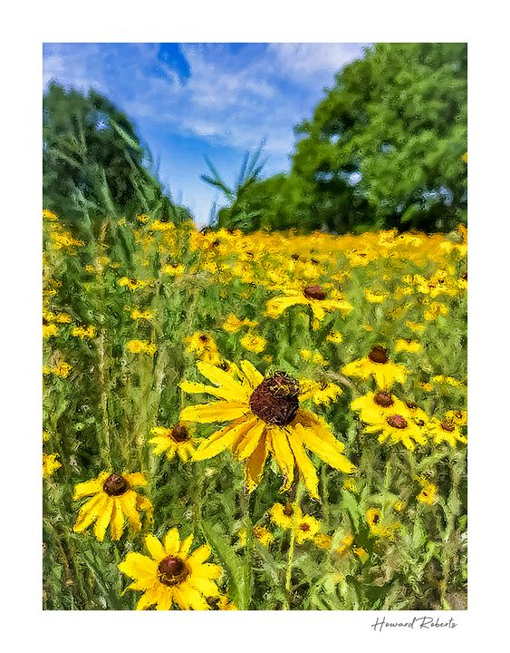 Yellow Cone Flower 2021signed - Howard Roberts Photography