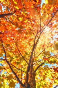 FALL TREE CANOPY