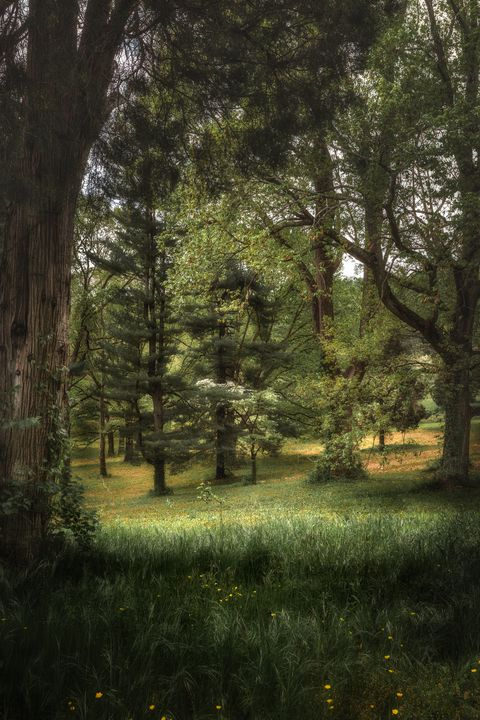Valley Forge sun and woods - Howard Roberts Photography
