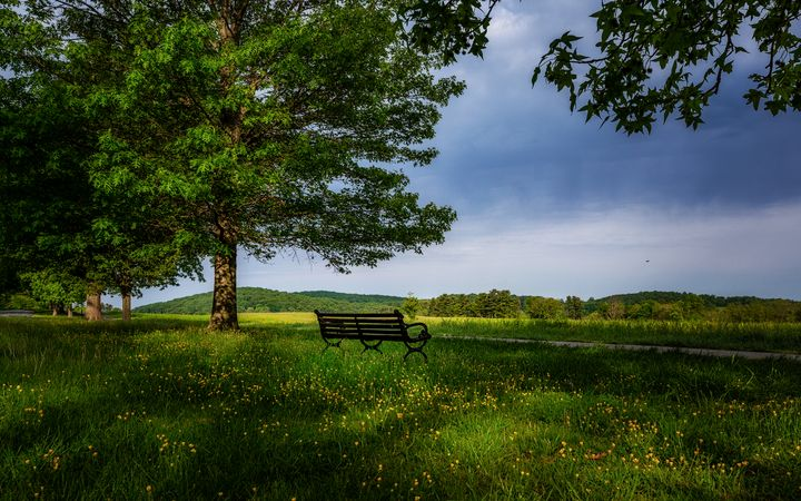 Valley Forge tree 05.25b - Howard Roberts Photography