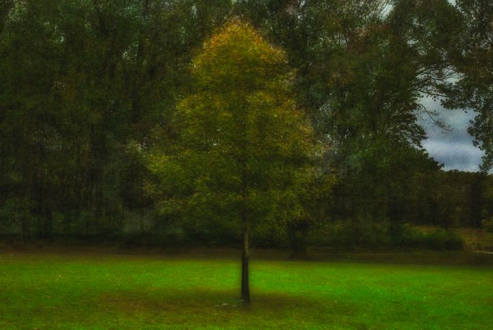 Impressionistic Photography 10/16/20 - Howard Roberts Photography