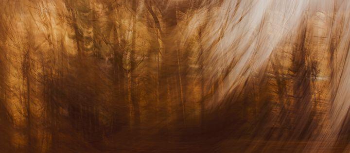 The Trees - Howard Roberts Photography