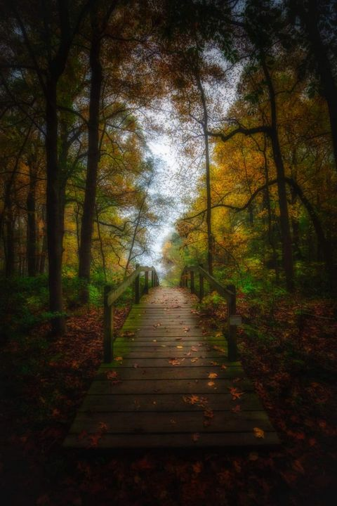 Valley Forge trail 101920 - Howard Roberts Photography