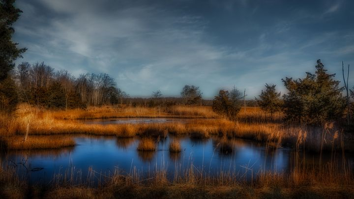 The Wetlands of New Jersey 01.10c - Howard Roberts Photography