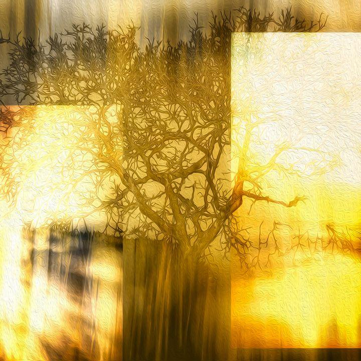 Golden Tree Oil - Howard Roberts Photography