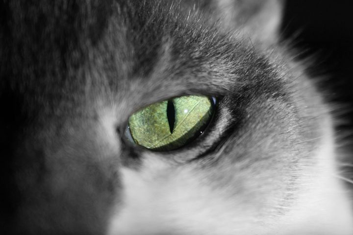 Cats eye - Austun's Photography
