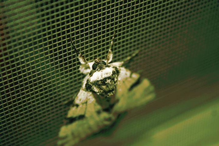 Green Moth - Austun's Photography