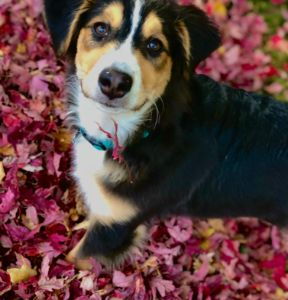 Puppies first fall