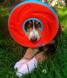 Ivy's frisbee