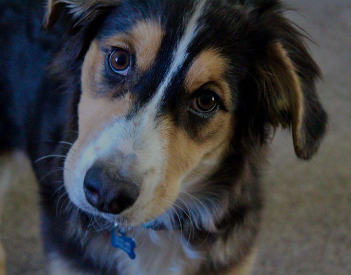 Puppy - Austun's Photography