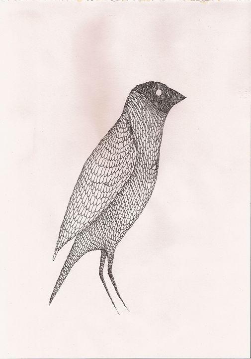 bullfinch - Pedro Freitas