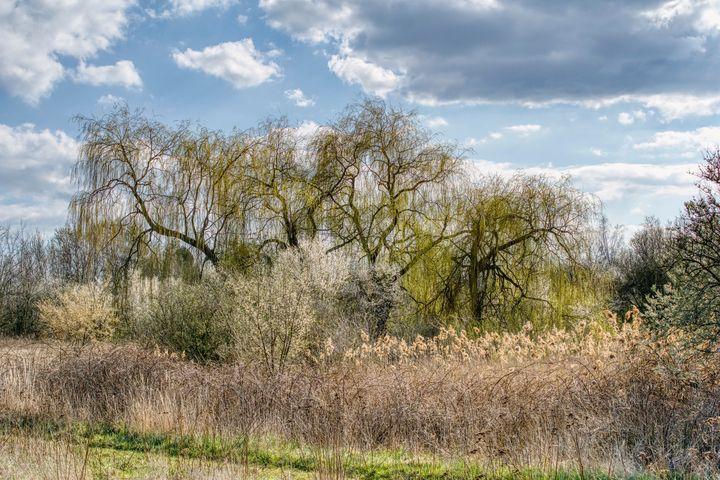 sunny spring weather - Jarek Witkowski gallery
