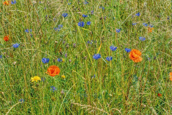 colorful meadow - Jarek Witkowski gallery
