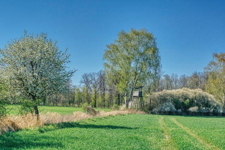 spring near the forest - Jarek Witkowski gallery