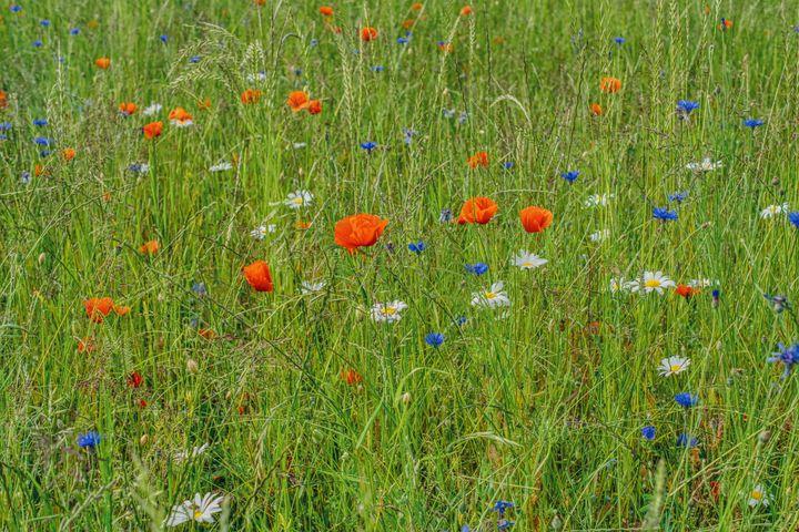 summer meadow - Jarek Witkowski gallery