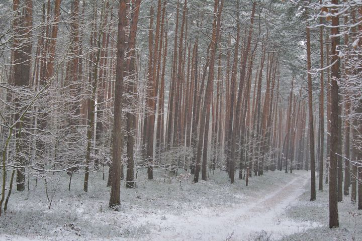 forest road covered with snow - Jarek Witkowski gallery
