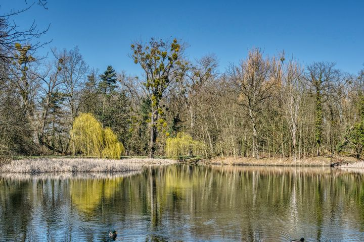 in the park in the early spring - Jarek Witkowski gallery