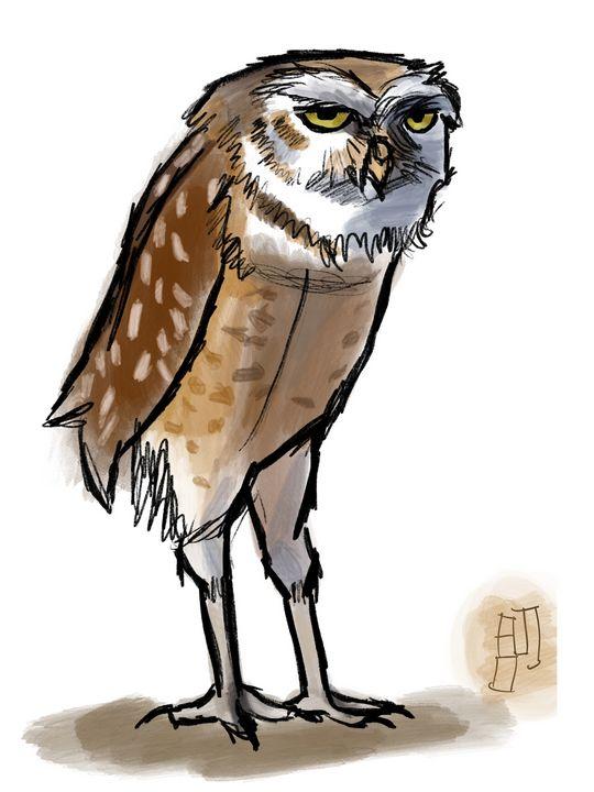Monday Owl - NOAJ