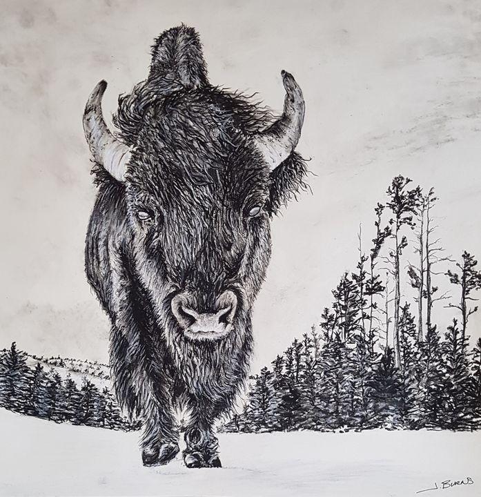 Buffalo - Burns - Fine Art