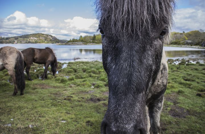 beautiful horse in stunning landscap - Inglund Photography