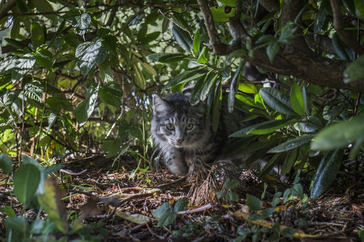 Sneaky cat - Inglund Photography