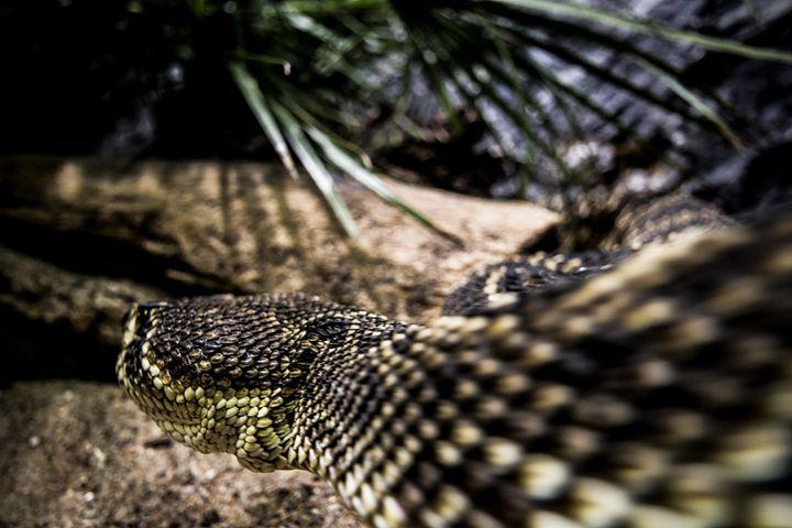 Snake - Inglund Photography
