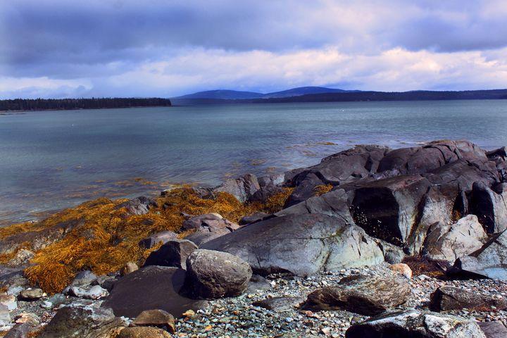 the shore - peggy loughlin