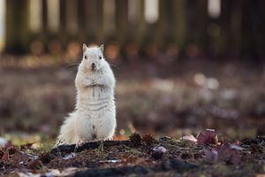 A White Squirrel